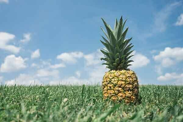 origin of pineapple