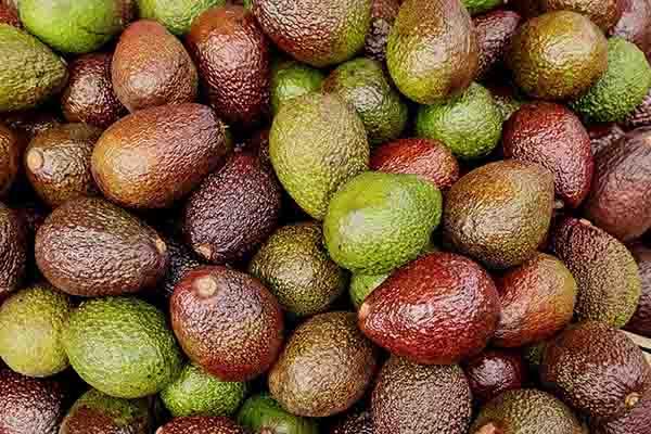 avocado mask benefits